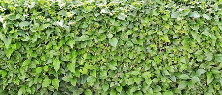 cutoff: The cut-off bush with leaves close up Stock Photo