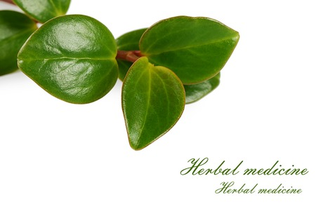 medicinal herb: The medicinal herb isolated on white background