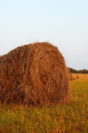 haymaking: The haystack against the sky. Haymaking time.