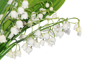 lily of the valley: Lily of the Valley isolated on white Stock Photo