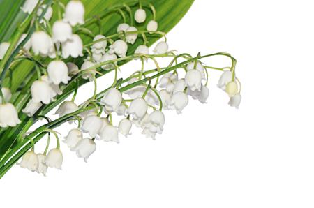 flor de lis: Lirio de los valles aislado en blanco