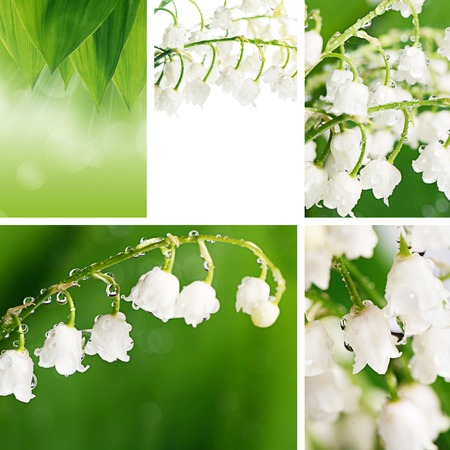 The lily of the Valley - Convallaria Majalis Stock Photo