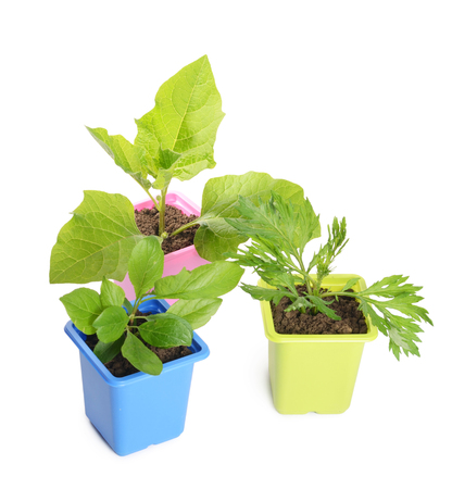 cultivate: Green plant in a flower pot isolated Stock Photo