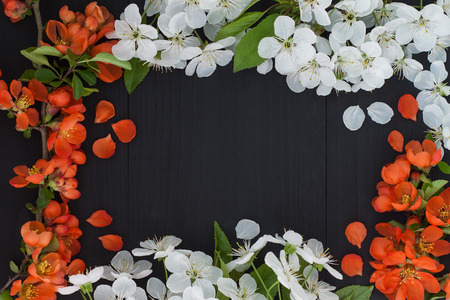 Spring floral frame background with white cherry blossom and red chaenomeles flowers
