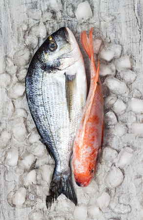dorada: Couple of raw fresh dorada and red tilapia fish on ice. Culinary seafood background. Top view, still life Stock Photo