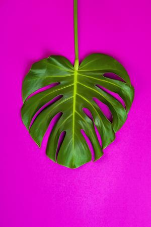 Groen tropisch palmblad op roze gekleurde achtergrond. Minimale vlakke lay-stijl. Boven, bovenaanzicht, kopie ruimte Stockfoto