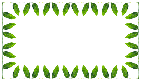 perimeter: frame of a green and succulent leaves peas  on the perimeter connected  a stem, isolated on white Stock Photo