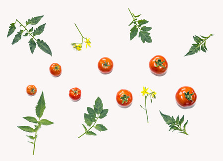 depending: Template for your design. Composition of tomatos and leaves, arranged depending on their size. The concept of  organic food, healthy eating and a healthy lifestyle. Stock Photo