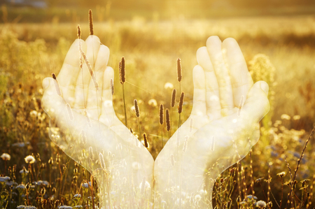 implies: Image of hands and flowers, created by using multiple exposure effect. Concept implies a care for the environment and its protection, ecological compatibility of products, etc Stock Photo