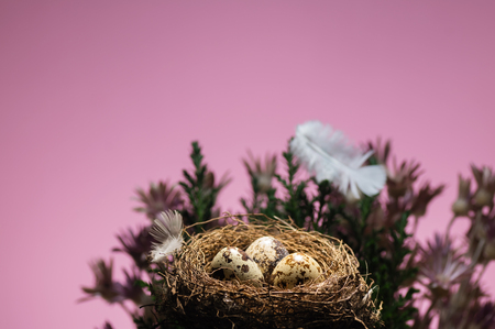 Quail eggs in nest on pink background.