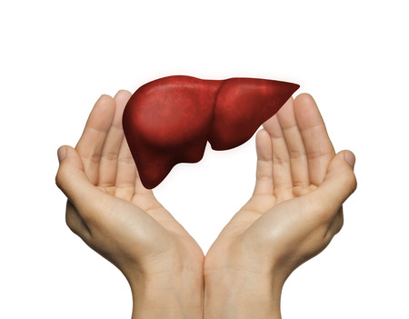 A human liver between two palms of a woman on white isolated background. The concept of a healthy liver. Stockfoto