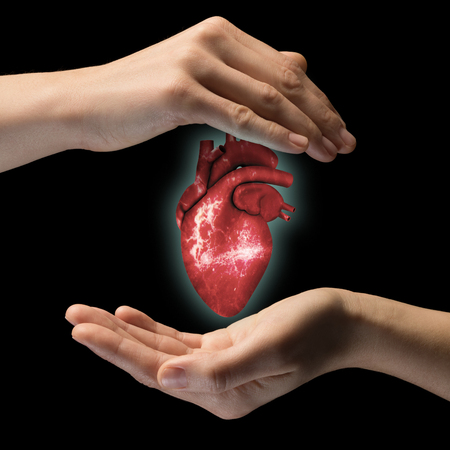A human heart between two palms of a woman on black isolated background. The concept of a healthy heart. Stockfoto