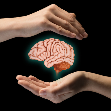 A human brain between two palms of a woman on black isolated background. Brain protection and intellectual rights concept. Stockfoto