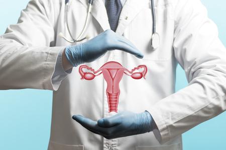 Wizerunek lekarza w białym fartuchu i model układu rozrodczego kobiety nad jego rękami. Pojęcie zdrowego żeńskiego układu rozrodczego.