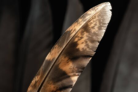 Fragment of bird's feather, close-up. Black and white. Stok Fotoğraf - 130680367