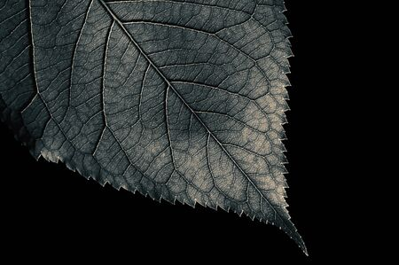 Abstract black and white leaf texture for background on black isolated background Stok Fotoğraf