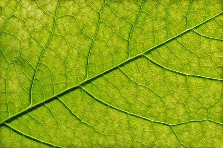 Green leaf texture, close-up. Abstract nature background. Stok Fotoğraf - 130680269