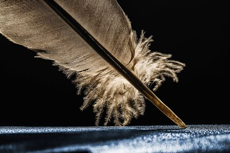 Fragment of bird's feather, close-up. Image.