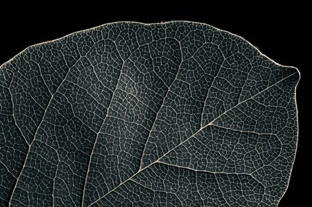 Abstract black and white leaf texture for background on black isolated background Stok Fotoğraf - 130680283