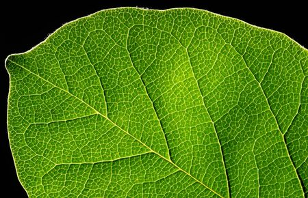 Abstract green leaf texture on black background.