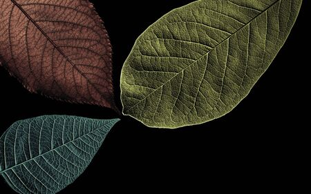 Abstract pattern from beautiful textured leaves on black background. Image