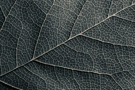 Abstract black and white leaf texture for background on black isolated background Stok Fotoğraf - 130680219