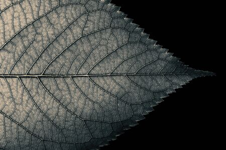 Abstract black and white leaf texture for background on black isolated background Stok Fotoğraf - 130680218