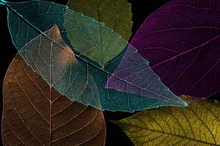 Abstract pattern from beautiful textured leaves on black background. Illustration Stok Fotoğraf