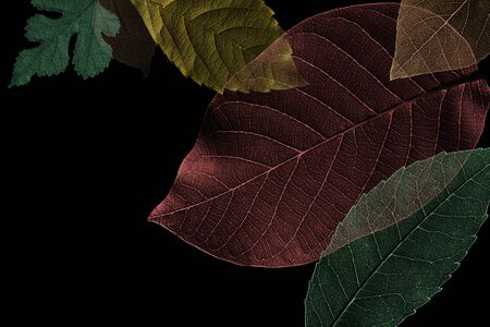 Abstract pattern from beautiful textured leaves on black background. Illustration Stok Fotoğraf - 130680154