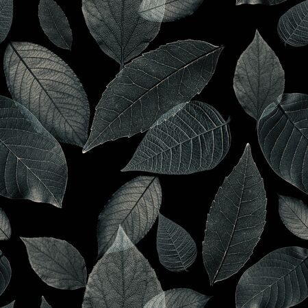 Monochrome seamless pattern from beautiful exotic leaves on black background. Image
