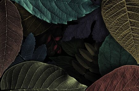 Abstract pattern from beautiful textured leaves on black background. Illustration Stok Fotoğraf - 130680100