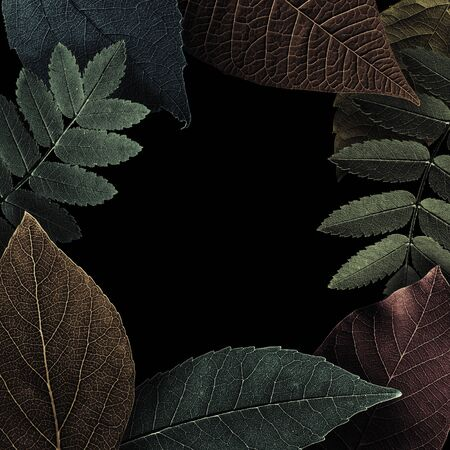 Frame is created from beautiful, colored, textured leaves on black. Illustration