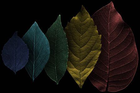 Composition from five colored, textured leaves on black. Abstract illustration.