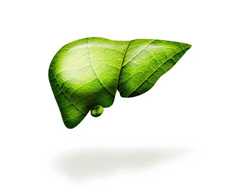 Green liver with leaf texture on white isolated background. Healthy liver. Concept