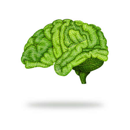 Green brain with leaf texture on white isolated background. Healthy brain. Concept Banco de Imagens