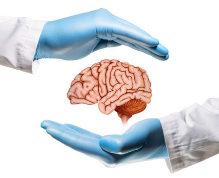 Brain between two palms on white isolated background. Concept of a healthy brain.