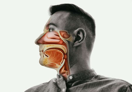 Anatomy of the mouth, throat and nose on man portrait. Archivio Fotografico