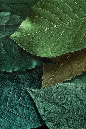 Abstract pattern with beautiful textured leaves on black.