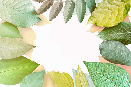 Beautiful frame out of different leaves on white background. Фото со стока