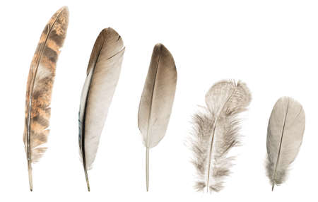 Set of five different feathers on isolated white background.