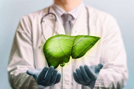 Green liver with leaf texture over doctor's hands. Concept of healthy liver.