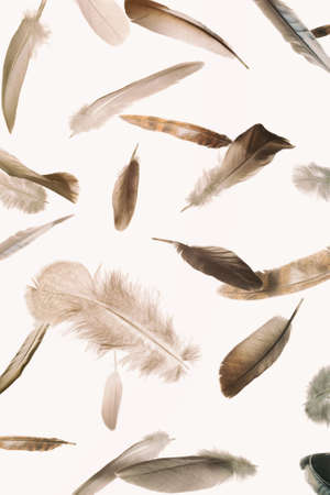 Abstract pattern with falling feathers on white isolated background.