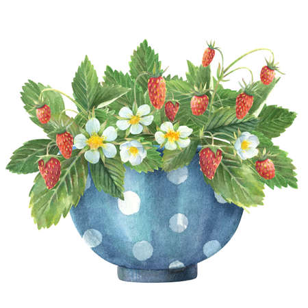blue bowl with wild strawberry leaves, flowers and berries. watercolor illustration
