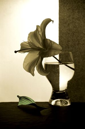 Lily in a glass with water photo