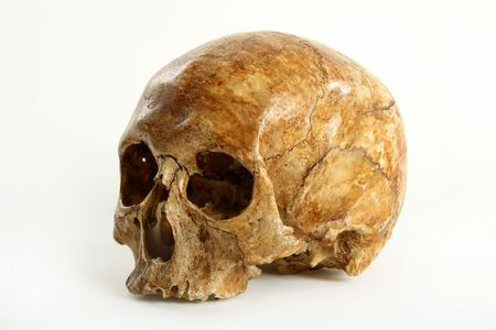 Skull of the person on a white background