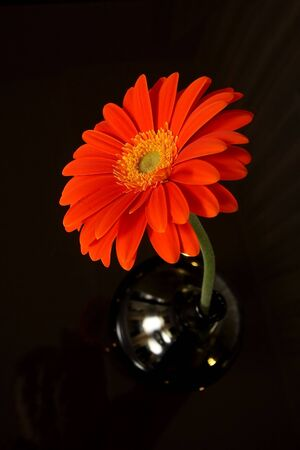 Flower in a vase on a table photo