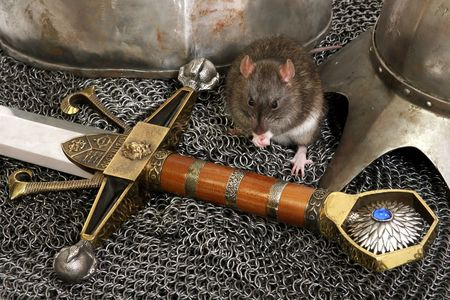 The big grey rat on a knightly armour photo