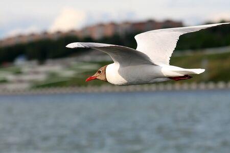 Seagulls against the dark blue sky. Summer, a city. photo