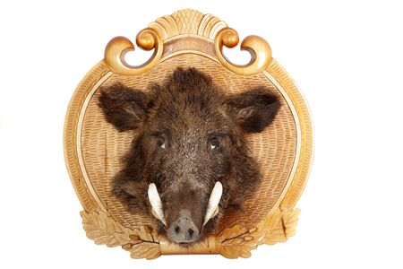 Stuffed animal of a head of a wild boar on a wooden board Stock Photo