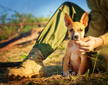 the puppy of a mayerikansky Staffordshire terrier sits about the owner's foot in a military uniform